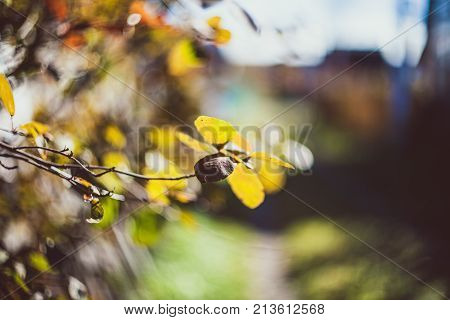 Photo depicting a macro view of dry bright yellow and brown leaves on the tree brunch. Vintage tone, filtered effect. Nature background. Nature photography. Outdoor photography. Selective focus.