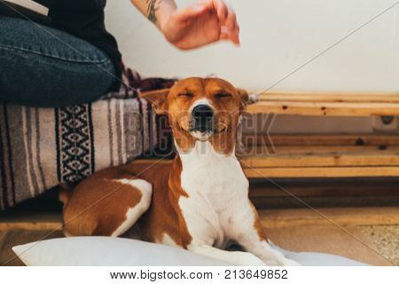 Soft focus shot of cute and adorable little puppy expecting petting and caress from owner on head smiles and makes funny face expression concept pet friendship and animals