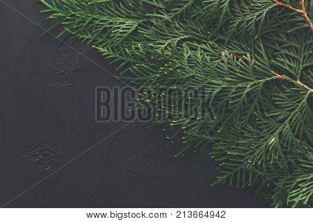 Green thuja tree branches frame on black background. Natural needles backdrop, bright evergreen texture, copy space