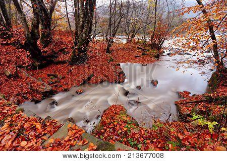 Autumn Creek In Hornbeam And Beech Forest.
