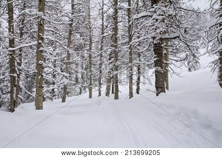 Winter landscape with ski trail in snowy aspen forest