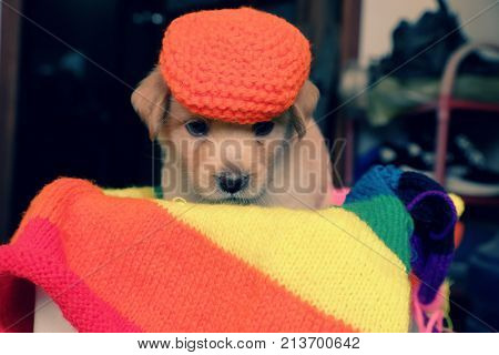 Cute Puppy On Colorful Blanket