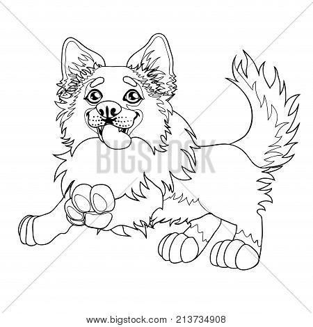 The cheerful puppy of a Border Collie runs forward. A contour line vector illustration separately on white, page coloring book, square.