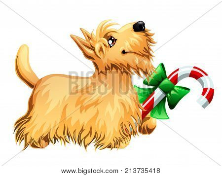 The cute puppy of a dog of Scottish Terrier and red white candy cane. A yellow dog a symbol 2018 new years according to the Chinese calendar. A cartoon vector illustration isolated on white.