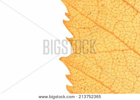 Isolated Dry Leaf Texture. Place for Text. Natural Organic Background. Transparent Floral Pattern. poster