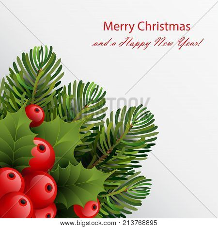 Christmas card template with ilex (holly) red berries and leaves green fir tree branches.