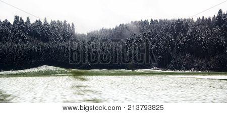 Early snow falling on a green field