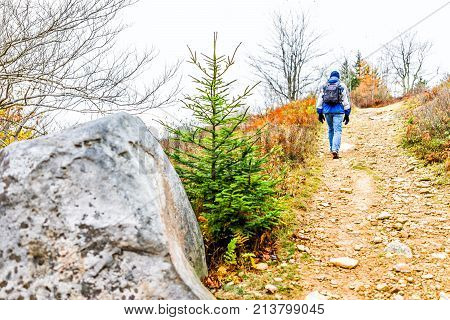 Man In Cold Jacket Hiking Uphill On Trail Path Hill Meadow On Yellow, Golden Autumn Hike With Pine T