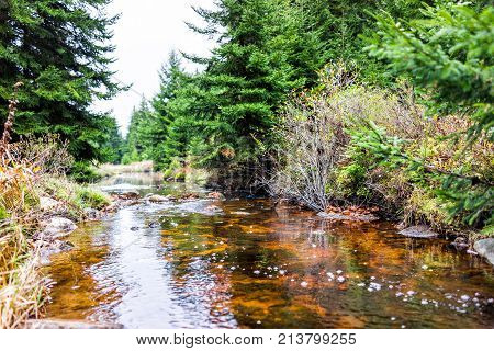 Closeup Of Red Creek In Dolly Sods, West Virginia During Autumn, Fall With Green Pine Tree Forest An