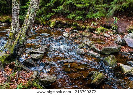 Red Creek In Dolly Sods, West Virginia During Autumn, Fall With Green Pine Tree Forest And Water Riv