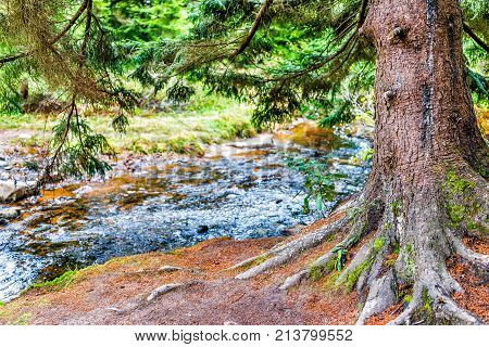 Red Creek In Dolly Sods, West Virginia During Autumn, Fall With One, Large Green Pine Tree Trunk In