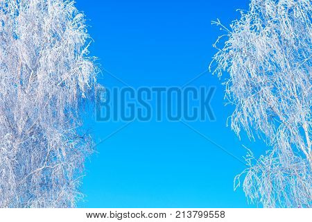 Winter Landscape Frost Branches Ober Blue Sky In Sunny Frosty Morning. Frosty Winter Day - Snowy Bra