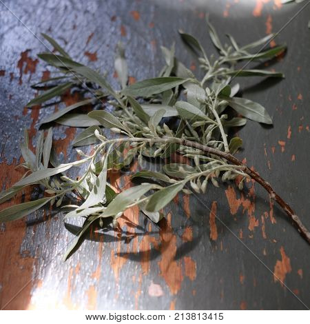Bouquet of pussy-willow branches on a wooden background. A space for the text.