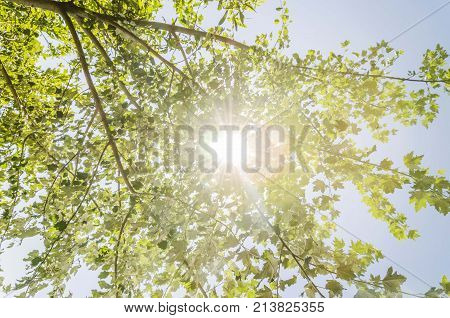 sunshine trough green nature tree branches. sunshine tree