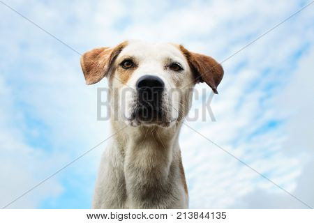 Portrait Of A Dog Looking Away With Mouth Opened