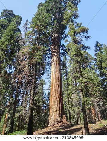 scenery at the Sequoia and Kings Canyon National Park with sequoia trees in California USA