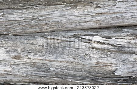 Wooden surface eroded by water. Old wood gray background.