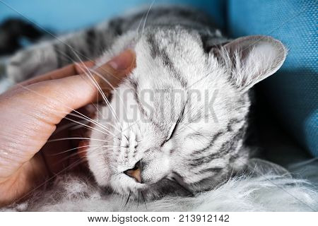 The cat loves affection. Smoothing the cat with his hand