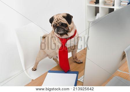 Business Dog With Desktop Computer