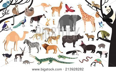 Collection of exotic animals and birds living in savannah and tropical forest or jungle isolated on white background. Set of cute cartoon characters. Flat bright colored vector illustration