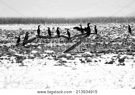 birds on a branch arising from a lake