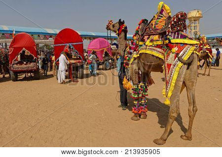 Pushkar, India, October 29, 2017 : Decorated Camels. Pushkar Camel Fair Is One Of The Largest Cattle