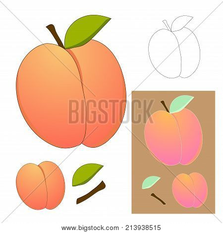 Cute Peach isolated on White Background. Vector illustration.