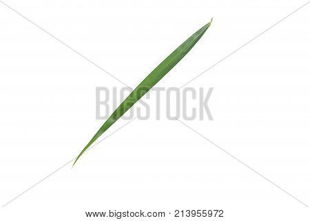 Palm leaf isolated on white background., top view