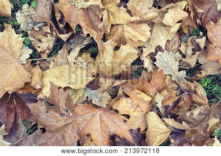 Autumn background with dry leaves and grass. Stock Photo.