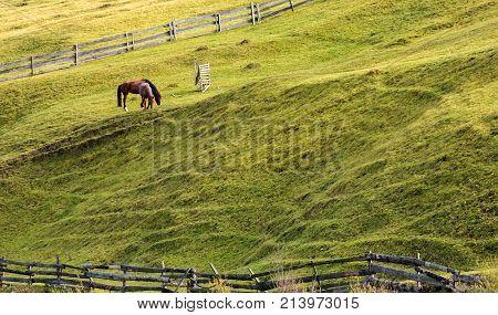 Horses Grazing On A Grassy Hillside