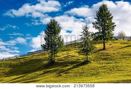 Spruce Trees And Wooden Fence On Grassy Hillside