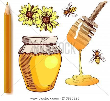 Set of colored sketches and realistic pencil. Collection of VECTOR illustrations. HONEY isolated on white.