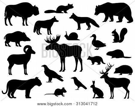 Set Of Black Silhouette Wild Forest Steppe Animals. Vector Illustration Isolated On White, Side View