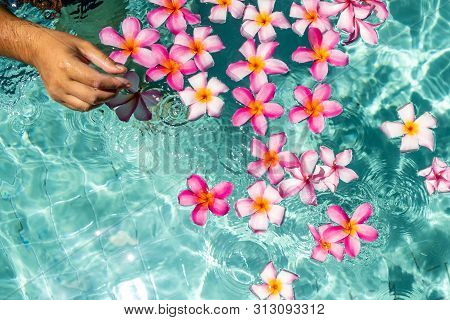 Hands Over The Pool With Flowers. Tropical Flowers Frangipani Plumeria, Leelawadee Floating In The W