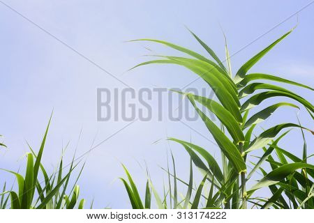 Lovely nature background of flora in high summer