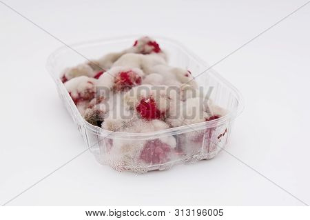 Closeup Of Rotten Moldy Raspberry In Plastic Box Isolated On White Background. Damaged Ripe Berry Wi