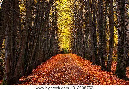 Autumn Park Alley. Bright Autumn Trees And Orange Autumn Leaves. Autumn Landscape. Yellow Autumn Tre