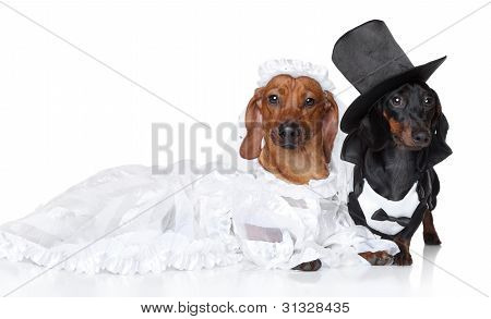 Fashionable Dachshund Dog Wedding