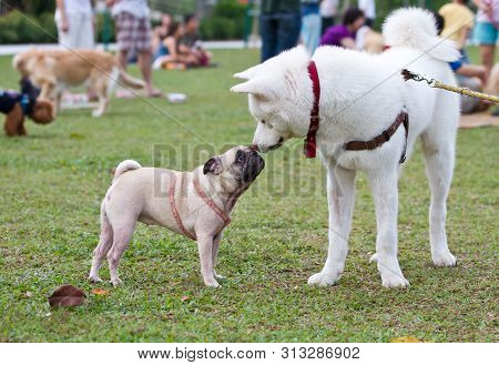 Dogs Socialising In A Green Park With Other Pet Owners.
