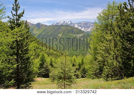 Green Scenery (with Pine Trees) Viewed From A Hiking Path  Leading To Fromage Pass Above Ceillac Vil