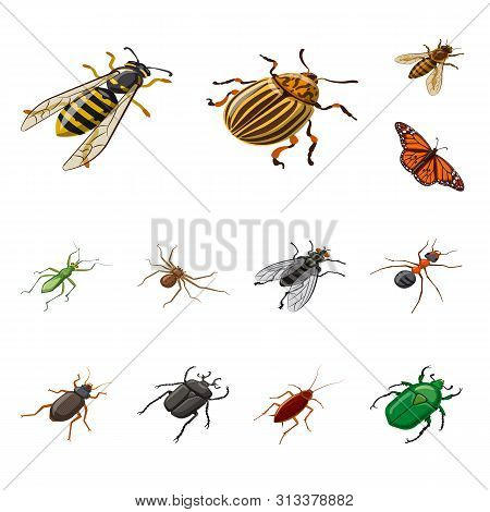 Isolated Object Of Insect And Fly Sign. Set Of Insect And Entomology Vector Icon For Stock.
