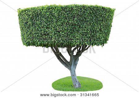 Isolated Green Tree.