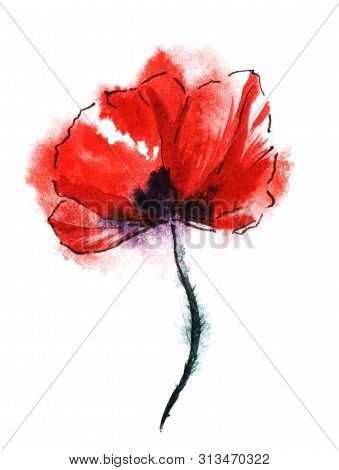 Colorful Red Poppy Flower On Black Stalk Isolated On White Background. Watercolor Hand Drawn Paintin