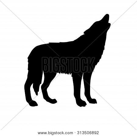 Vector Black Silhouette Of Wolf Howling Isolated On White Background