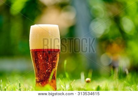 Bubbles And Foam In A Glass Of Light Beer. Glass Of Cold Beer On The Grass.