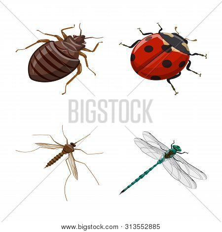 Isolated Object Of Insect And Fly Sign. Collection Of Insect And Entomology Stock Symbol For Web.
