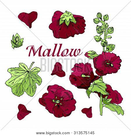 Set With  Bouquet And Single Flowers Of Burgundy Mallow And Green Leaves. Hand Drawn Ink And Colored
