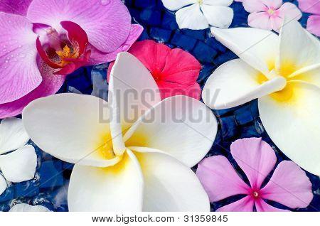 Floating Plumeria, Vinca, And Orchid