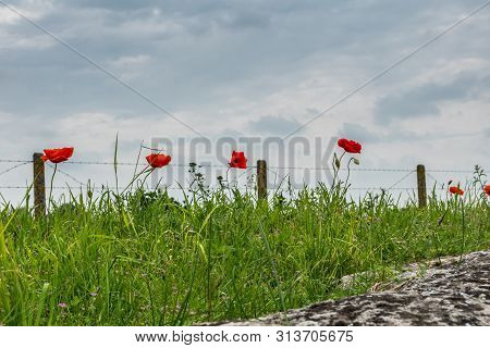 Diksmuide, Flanders, Belgium -  June 19, 2019: Historic Ww1 Trenches, Called Dodengang Along Ijzer R