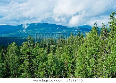 View of taiga in the Kvarkush plateau. Perm Krai. Russia. poster